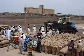 جملة وارد الذرة لأسواق محاصيل القضارف يصل إلى (٣٤٦١٦) جوال