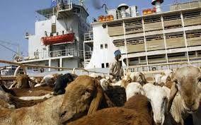 إنهاء أزمة تصدير الماشية للسعودية بشكل دائم